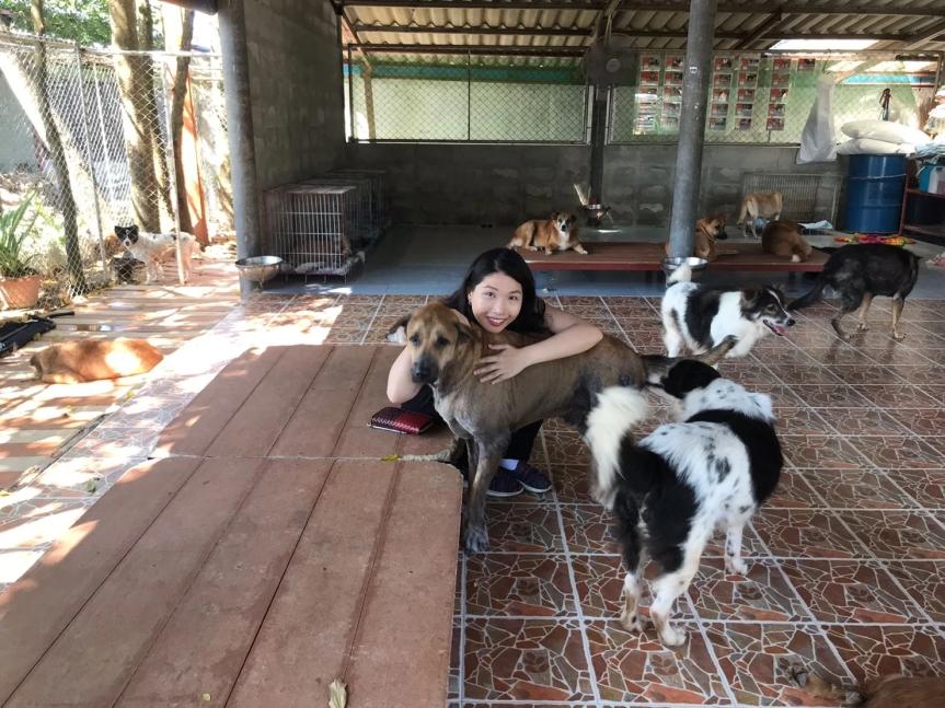 Soi Dog Foundation inPhuket